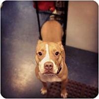 Adopt A Pet :: Vega - Pittsbugh, PA