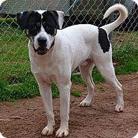 Adopt A Pet :: Boomer - Athens, GA