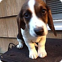 Adopt A Pet :: Elmer T Lee - Brattleboro, VT