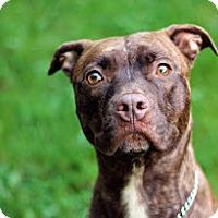 Adopt A Pet :: Luna - Tinton Falls, NJ