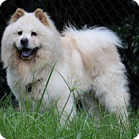 Adopt A Pet :: Blizz - Tucker, GA