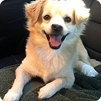 Adopt A Pet :: COREY (video) - Los Angeles, CA