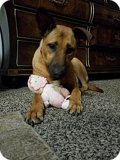 Labrador Retriever Mix Dog for adoption in Carlsbad, California - Rosie