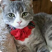 Adopt A Pet :: Merry (5 month girl) - Witter, AR