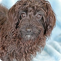Adopt A Pet :: Ranchero - Encinitas, CA