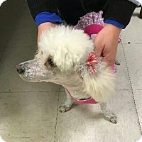 Adopt A Pet :: Hope aka Fancypants. - springtown, TX