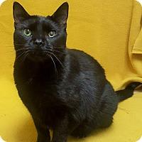 Adopt A Pet :: Miss Mina - Colorado Springs, CO