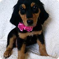Adopt A Pet :: Zara - Elkton, MD