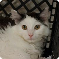Adopt A Pet :: Tessa - Greenwood, SC