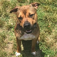 Adopt A Pet :: Ramsey - Va Beach, VA