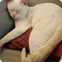 Adopt A Pet :: Dizzy - Toronto, ON