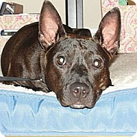 Adopt A Pet :: Tiny TRUDY loves dogs & kids! - Durham, NH