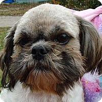 Adopt A Pet :: CORKY - P, ME