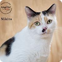 Adopt A Pet :: Nikita - Phoenix, AZ