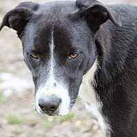 Labrador Retriever Mix Dog for adoption in Wynne, Arkansas - Cooper Rubble