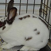 Adopt A Pet :: Aspen - Erie, PA
