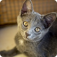 Adopt A Pet :: Gilly - Chicago, IL