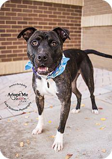 Pit Bull Terrier/Boxer Mix Dog for adoption in Charlotte, North Carolina - Zado
