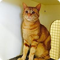 Adopt A Pet :: Freddy - El Dorado Hills, CA