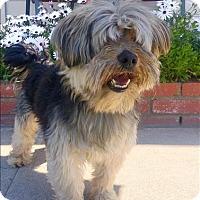 Adopt A Pet :: Dean - Encino, CA