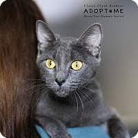 Adopt A Pet :: Alice - Edwardsville, IL