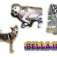 Adopt A Pet :: Bella III - Seminole, FL
