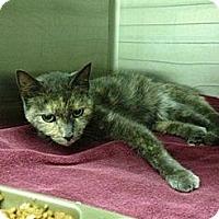 Adopt A Pet :: Egypt - New Egypt, NJ