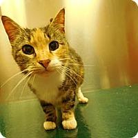 Adopt A Pet :: Jazzy - CARVER, MA