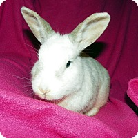 Adopt A Pet :: Mint - North Gower, ON