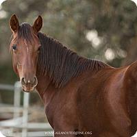 Adopt A Pet :: Bailey - El Dorado Hills, CA