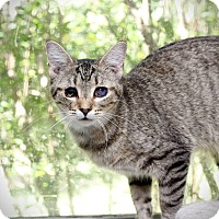 Adopt A Pet :: Emma - San Antonio, TX