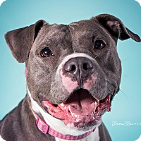 Adopt A Pet :: Glory - Troy, MI