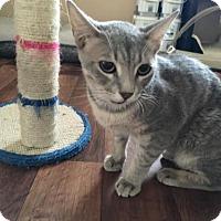 Adopt A Pet :: Horus - Bakersfield, CA
