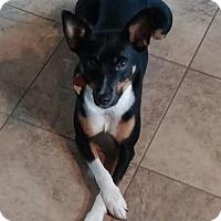 Adopt A Pet :: Juno - Columbia, MD