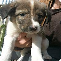 Adopt A Pet :: Bianca - Girard, GA