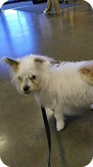 Terrier (Unknown Type, Small) Mix Puppy for adoption in Ogden, Utah - Gabby