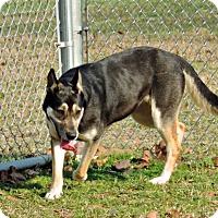 Adopt A Pet :: Roxy - Dublin, GA