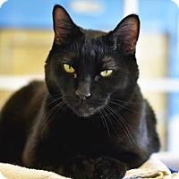 Adopt A Pet :: Naveen - Denver, CO