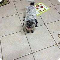 Adopt A Pet :: QT - Houston, TX