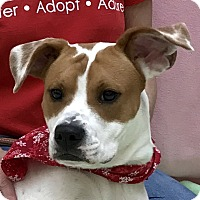Adopt A Pet :: Puppers - Evansville, IN