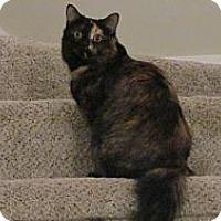 Adopt A Pet :: *Delilah - Winder, GA