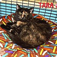 Adopt A Pet :: Tara - Converse, TX
