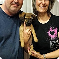 Adopt A Pet :: Crescendo - Sacramento, CA