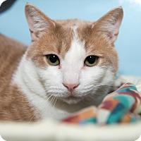 Adopt A Pet :: Francesco - New York, NY