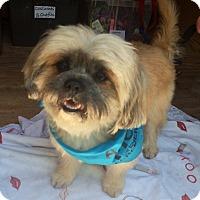 Adopt A Pet :: Jeffrey - Santa Monica, CA