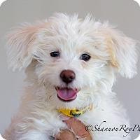 Adopt A Pet :: Fisher - Vacaville, CA