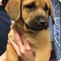 Adopt A Pet :: Bojangles - Cashiers, NC