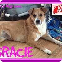 Adopt A Pet :: GRACIE - White River Junction, VT