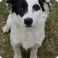 Adopt A Pet :: Trevor - Chester Springs, PA