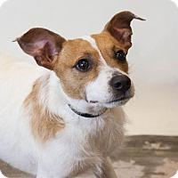 Adopt A Pet :: Princess - Rockwall, TX